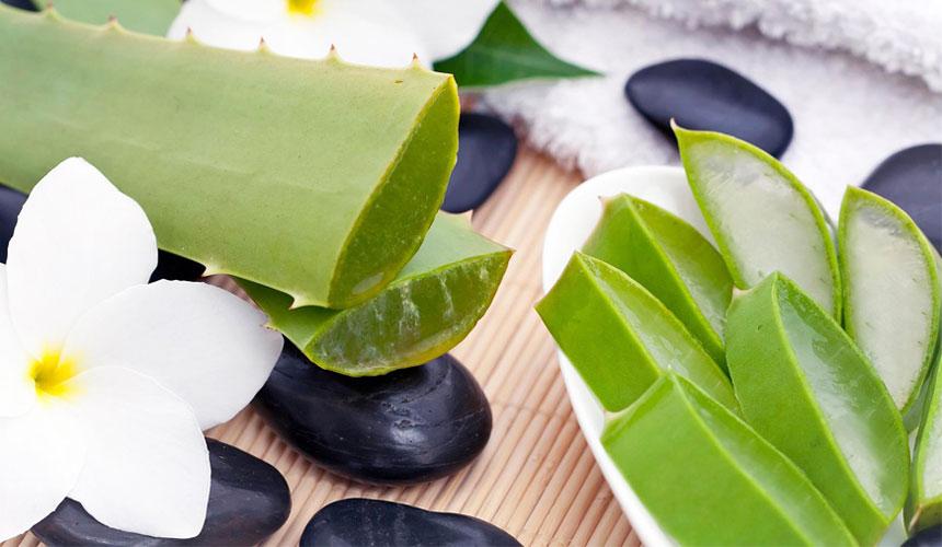 Aloe vera - Elenco ingredienti. Ricette cucina aloe vera